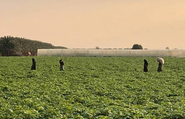 Agriculture jordan